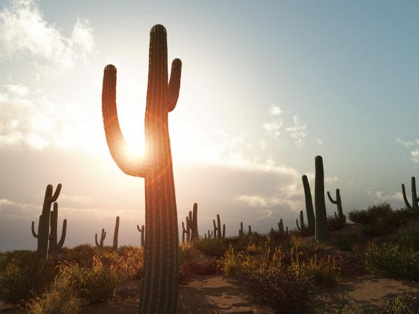 Arizona solar net metering