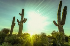 APS reveals its long-awaited 15-year energy plan for Arizona customers (solar boost included)