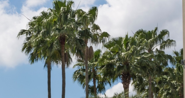 Florida-electric-vehicle-leaf
