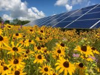Sunrise Solar proposes 'pollinator-friendly' habitat as part of new community solar plan