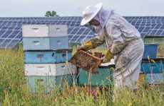 This apiary is owned and managed by Bare Honey.
