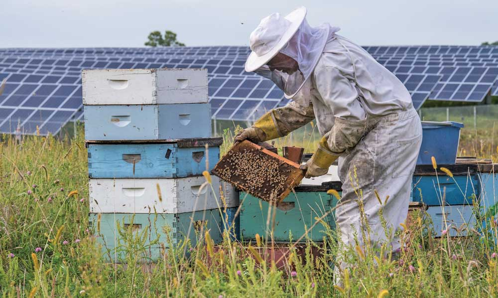 Solar apiary