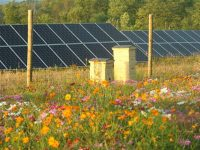 Power, plants: Seed mixes and ag innovation for PV solar