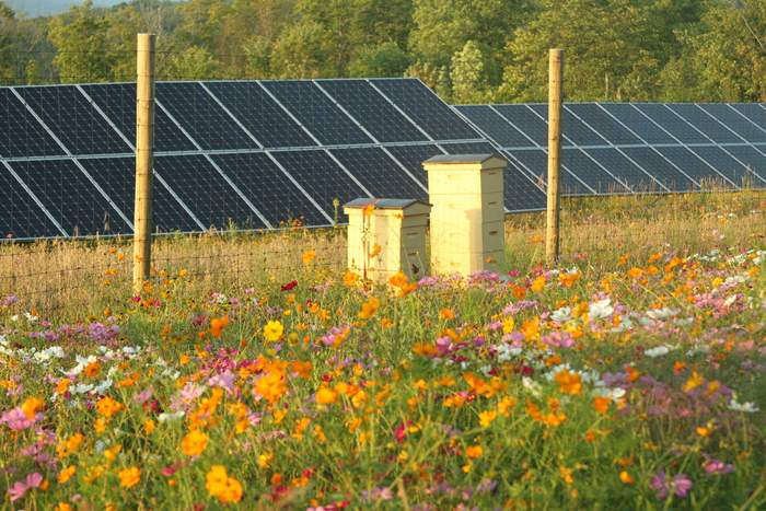 EngieVT_Flowering_Solar4_CourtesyFreshEnergy