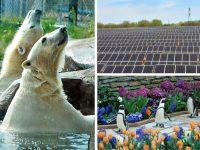 Minnesota's Como Park Zoo goes solar thanks to C2 Energy, City of St. Paul