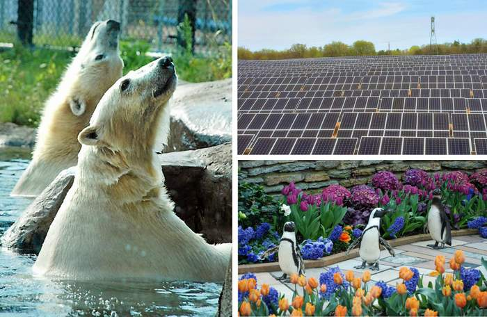 C2 Energy Capital and the City of St Paul bring solar energy to the Como Park Zoo and Conservatory_062120