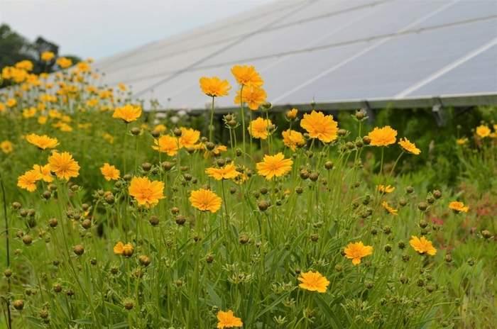 pollinator friendly solar