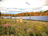 Encore Renewable, Greenbacker working on 14 pollinator-friendly solar projects in Northeast