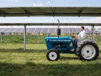 September 25, 2020 - Byron Kominek, owner of Jack's Solar Garden in Longmont, Colo., drives a tractor away following a kickoff event for the farm. Jack's is one of 30 agrivoltaics research sites being studied by the Joint Institute for Strategic Energy Analysis (JISEA) research partners at NREL and Colorado State University as part of the Innovative Site Preparation and Impact Reductions on the Environment (InSPIRE) project. (Photo by Werner Slocum / NREL)