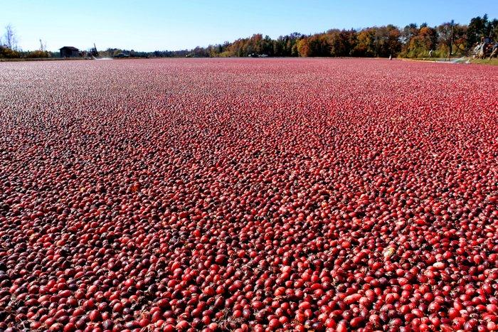 cranberry bog agrivoltaics