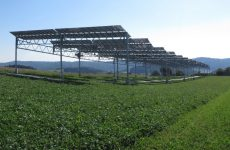 Growth Industry: Agrivoltaics gives new life to solar energy values such as harvest, yield and connection